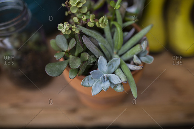 High angle view of potted plant on wooden table