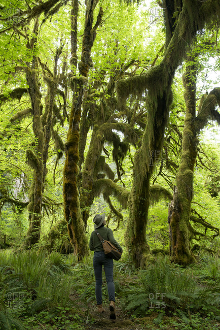 Rear view of female hiker walking amidst Hoh Rainforest