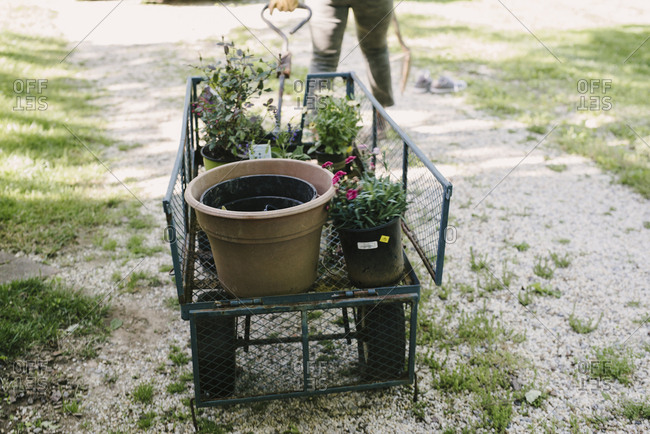 Low section of woman pulling garden wagon with potted plants at yard
