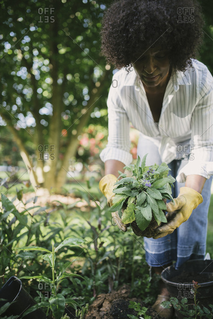 Woman holding plant while bending in garden