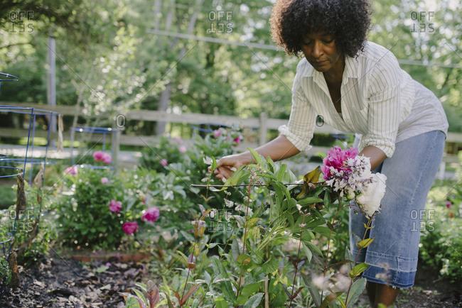 Woman examining flowering plants in garden