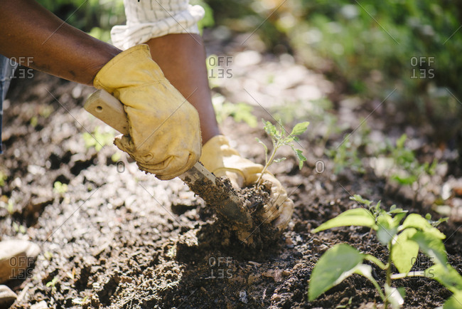 Cropped image of woman planting sapling in soil at garden