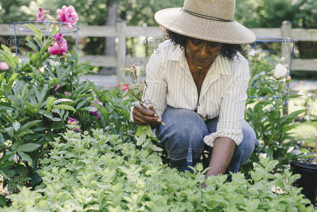 Mature woman holding pruning shears while looking at plants in garden