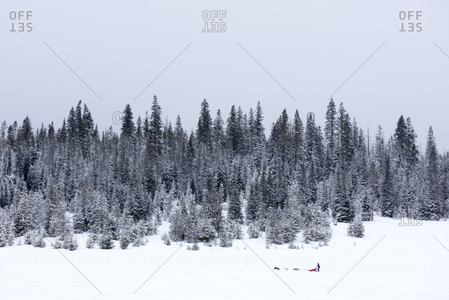Scenic view of pine trees on snow covered field against clear sky