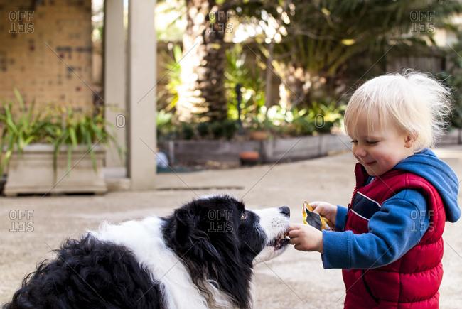 Side view of happy boy feeding Border Collie at yard