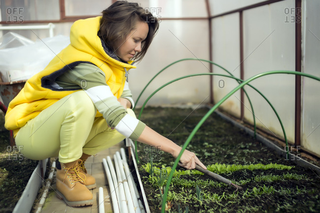 Side view of woman loosening soil with gardening fork while crouching in greenhouse