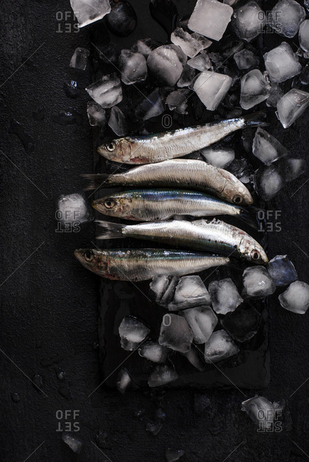 Overhead view of fish with ice cubes on black textured surface
