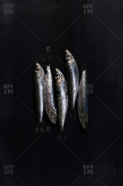 Overhead view of gray fish on black textured surface