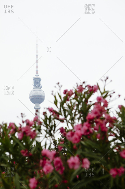 Fernsehturm TV tower in Berlin with flowers in foreground