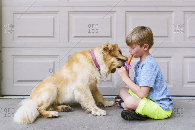 Young boy sharing a popsicle with a golden retriever dog