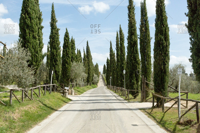 Tuscany country road lined with cypress trees
