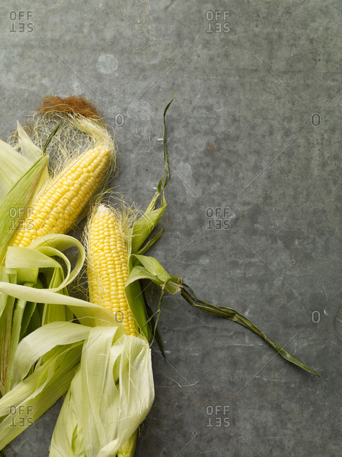 Fresh yellow corn with peeled back husks