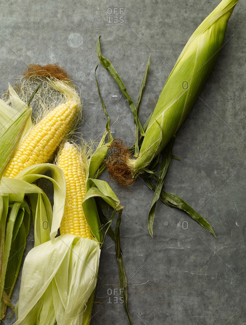 Fresh yellow corn with green husks and tassels