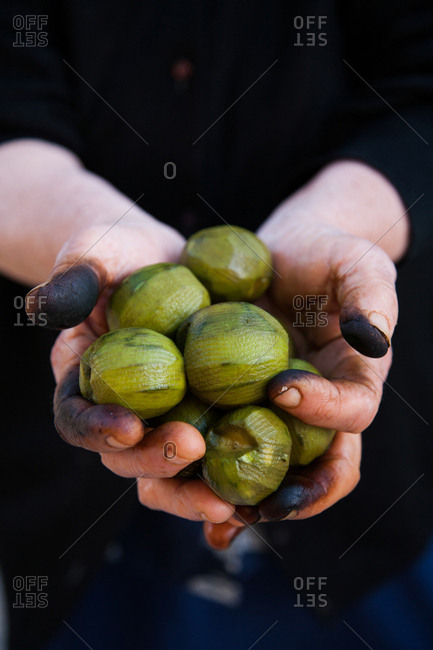 Blackened fingers of a woman holding a handful of peeled walnuts