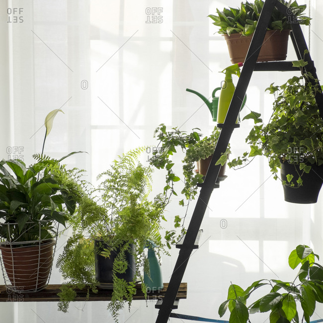Green potted plants near window curtain