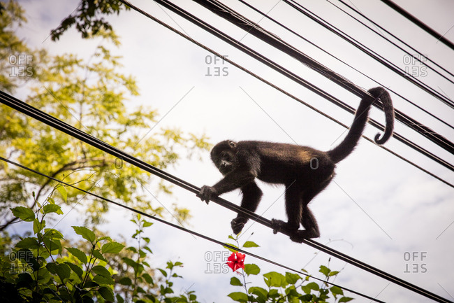 Monkey climbing on wires