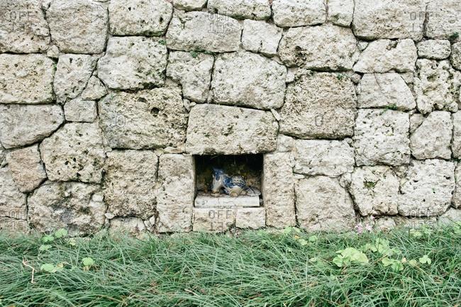 Lion figurine in rock wall, Japan