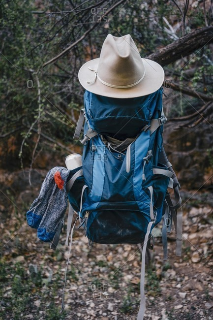Close-up of backpack and hat hanging from branch in forest