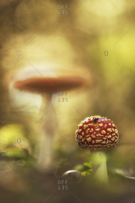 Fungus ( Amanita muscaria ) to Endla Nature Reserve. It is a nature reserve situated in central Estonia and protects a fresh-water system of mires, bogs, springs and rivulets