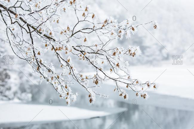 Winter landscape of Plitvice lakes National Park, Croatia, Jezerce, Dalmatia