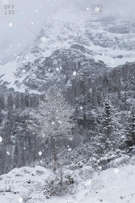 A winter view of the lake of Sorapiss, Dolomites, Italy, Belluno, Veneto