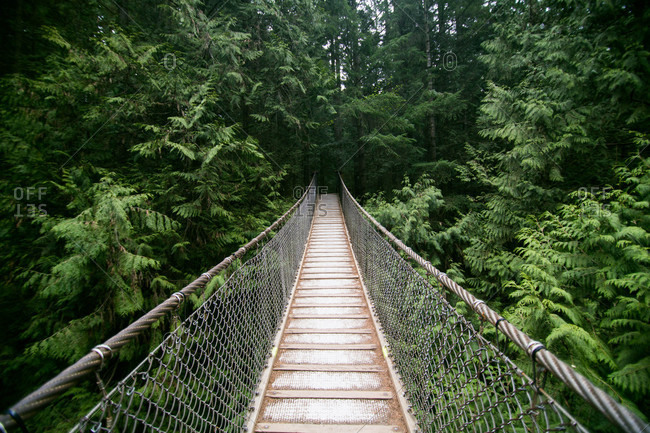 Hanging bridge in rainforest