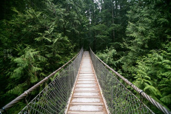 Hanging bridge in rainforest