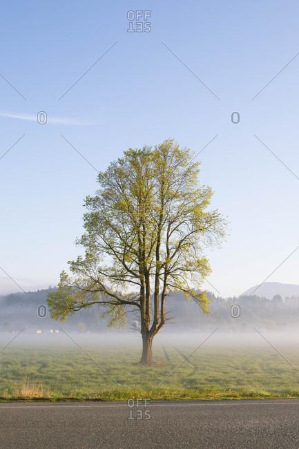 Tree in foggy farm field