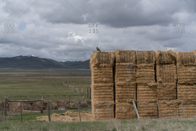 Bird on hay bales in mountain setting