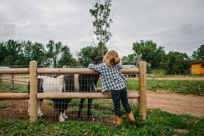 Boy looking at miniature horses