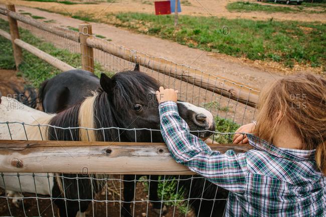 Boy petting miniature horses
