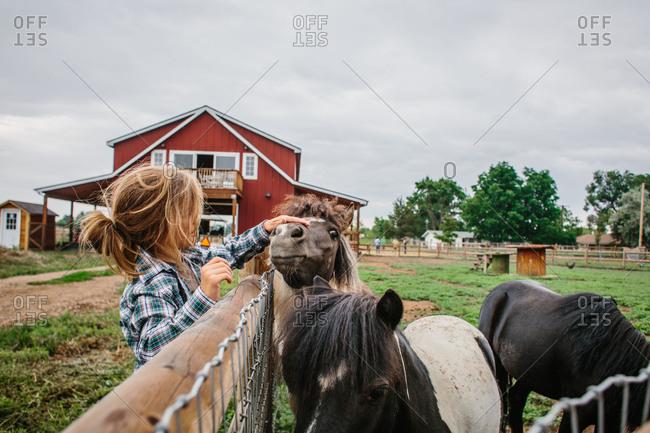 Boy petting miniature horses at farm