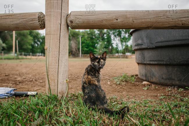 Cat sitting by a farm fence