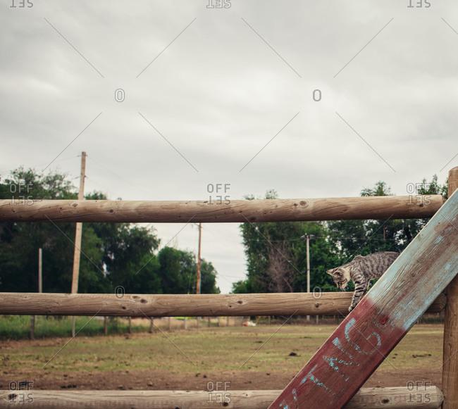 Cat climbing alone fence on farm