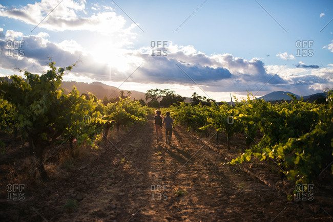 Boys walking in orchard in sunset