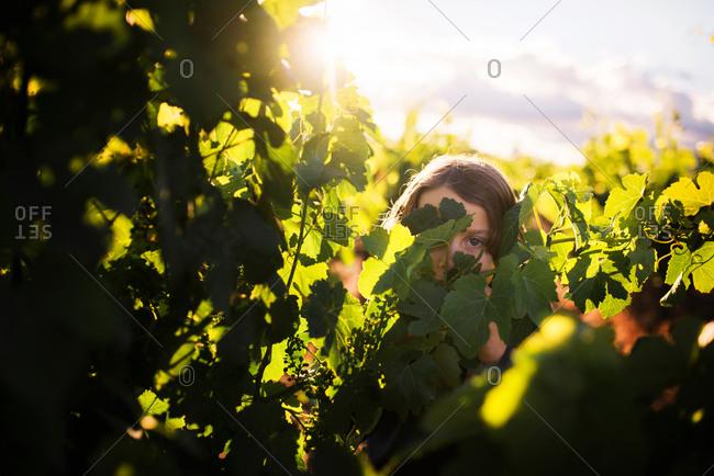 Boy hiding among grapevines