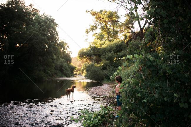 Boy watching dog in river