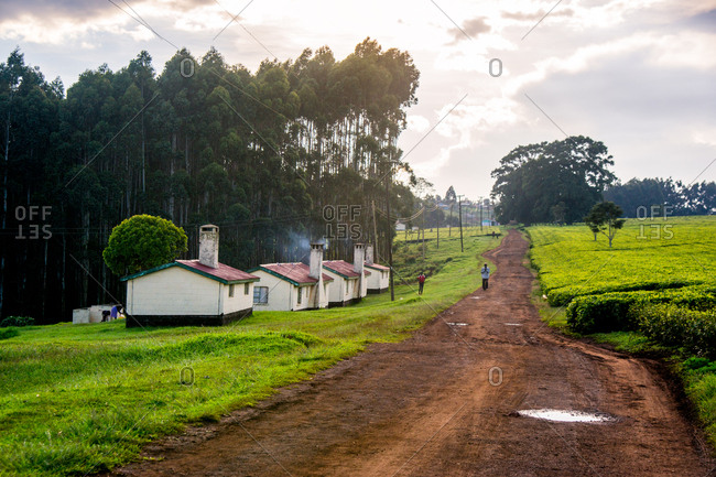 Houses on a tea plantation near Nairobi, Kenya