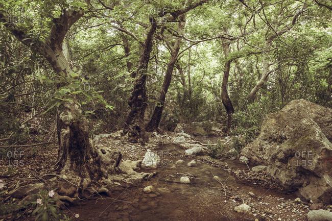 Greece- Crete- Kato Zakros- Gorge of the Dead