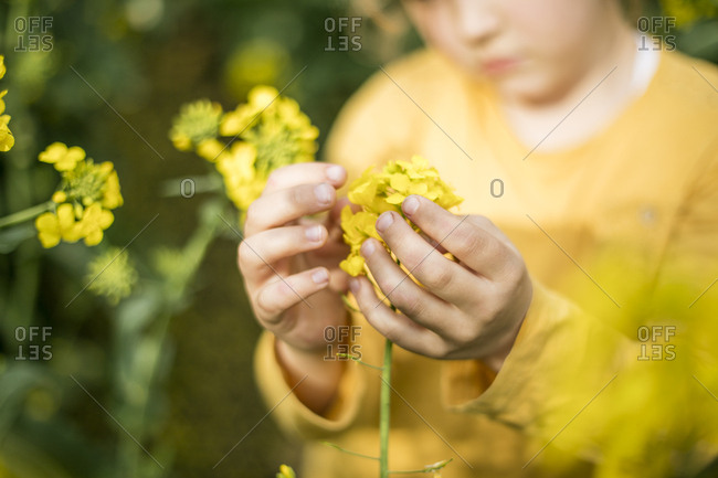 Close-up of girl examining plant in rape field