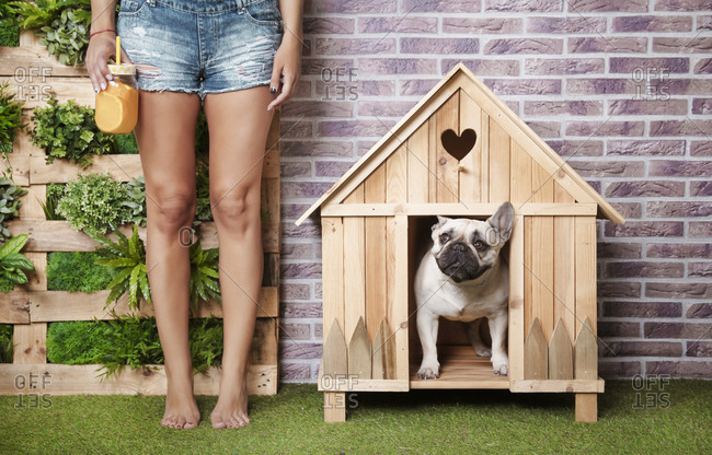 Woman standing next to french bulldog inside wooden dog house