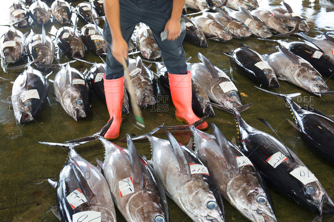 Person in boots at tuna auction in Katsuura, Japan