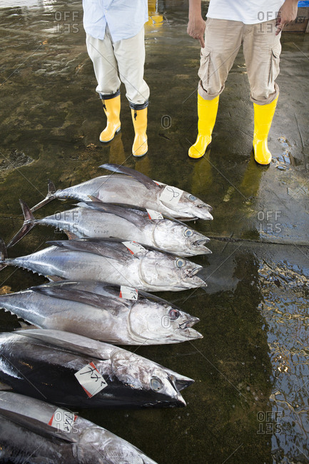 Fresh tuna lined up for auction in Katsuura, Japan