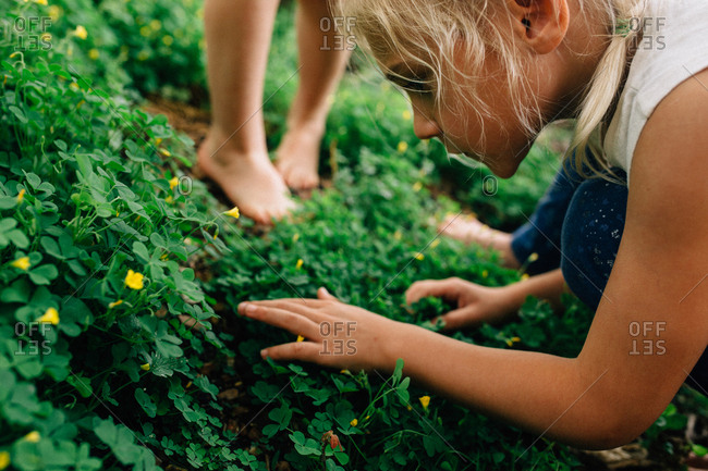 Girl looking through clover patch