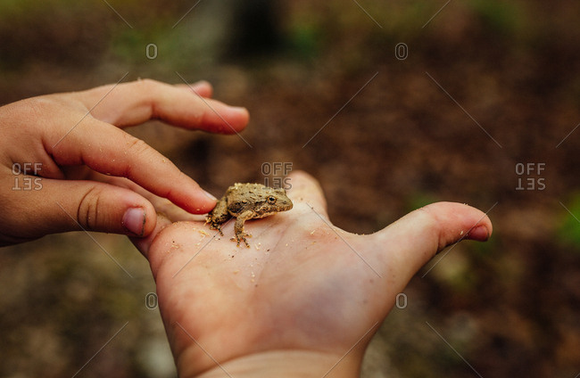 Child holding a toad in her hand