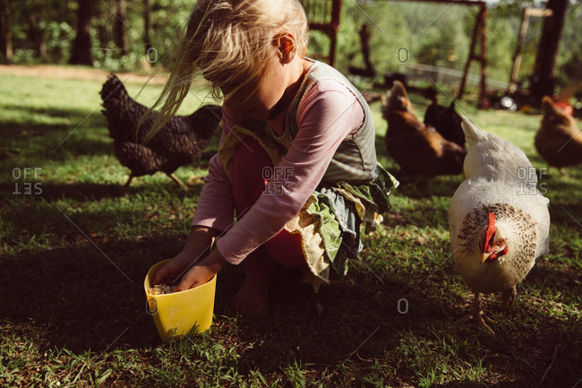A girl scoops feed for chickens