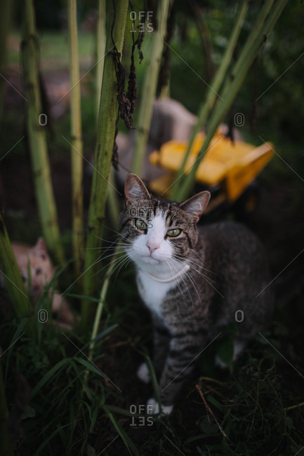 Portrait of cats outdoors