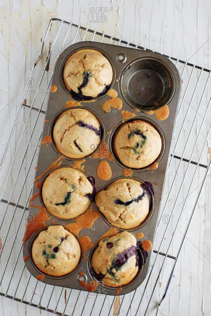 Gluten free blueberry muffins made with chick pea flour in a muffin tin on a white background.