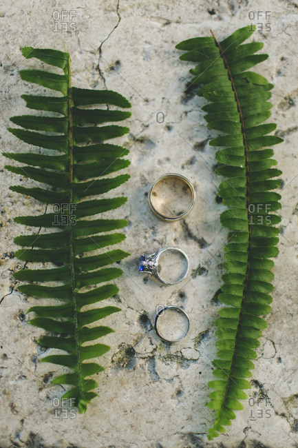Wedding rings beside fern leaves