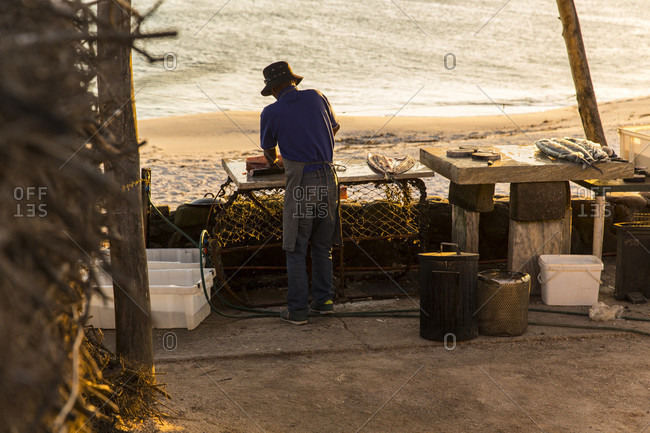 Lambert's Bay, South Africa, South Africa - June 12, 2016: Man fillets a fish at lamberts bay in south africa